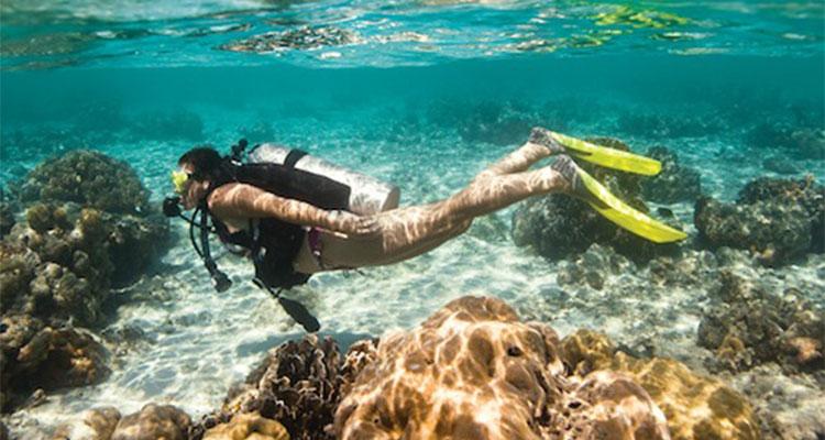 Dive courses papua diving resorts raja ampat indonesia - Dive resort raja ampat ...