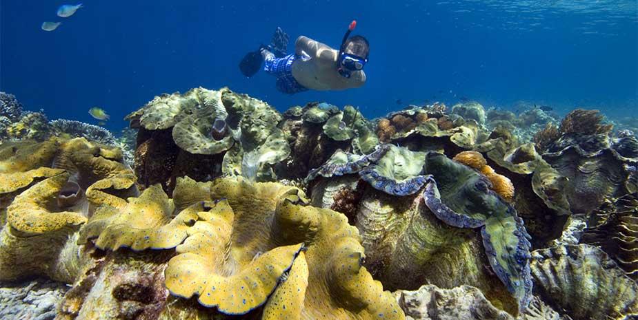Snorkelling papua diving resorts raja ampat indonesia - Raja ampat dive resort ...